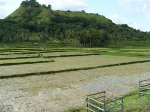 bohol-countryside-tours